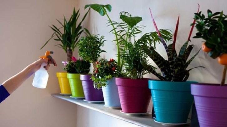 Aprende a cuidar a tus plantas