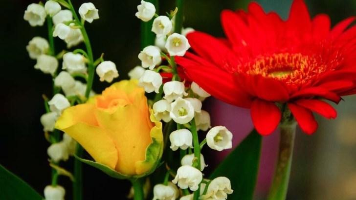 ¿Cómo conservar las flores frescas?