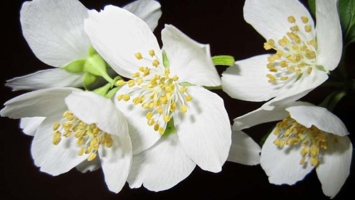 Tres plantas que nos ayudan a conciliar el sueño