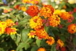plantas-que-pueden-orientar-sus-flores
