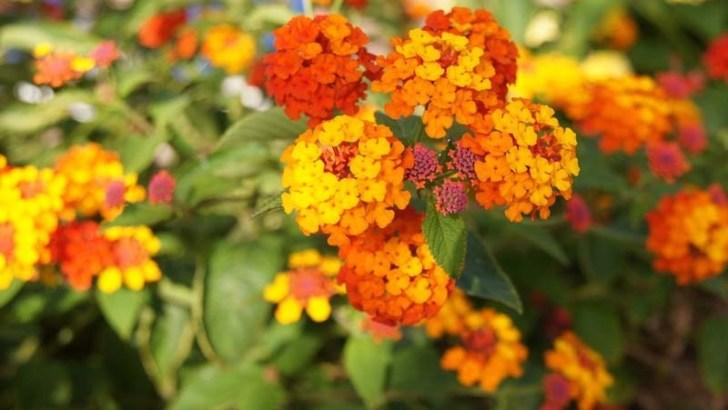 Se demuestra que las plantas pueden orientar sus flores