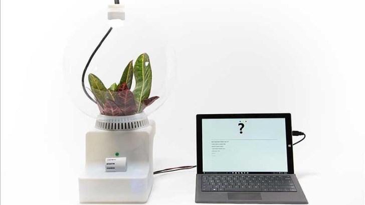 Inventan un traductor de plantas