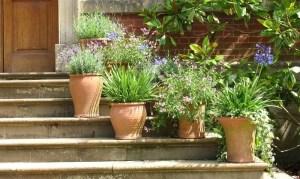 sustratos para plantas en macetas