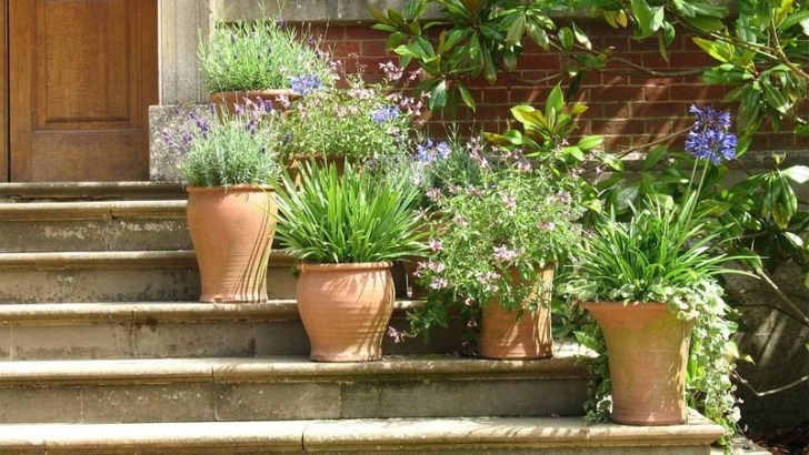 Los mejores sustratos para plantas en macetas