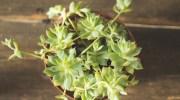 Macetas para diferentes clases de plantas