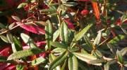 3 plagas de plantas comunes en el otoño