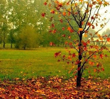 Por qu las plantas pierden las hojas en oto o www for Caracteristicas de los arboles de hoja perenne