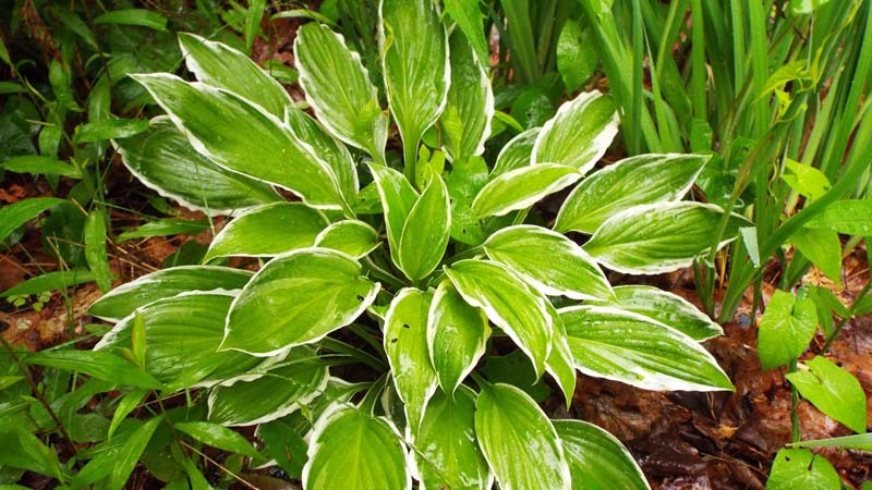Todo sobre la respiraci n de las plantas www - Todo sobre las plantas ...