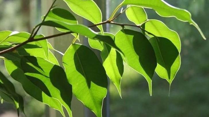 Plantas que reducen o aumentan la humedad