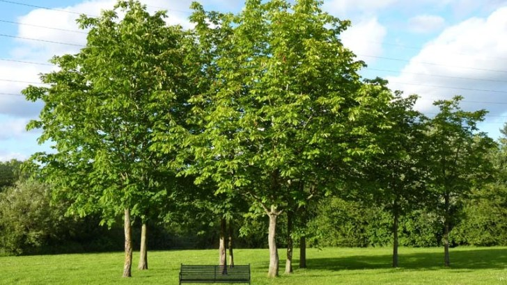 Los sentidos de los árboles