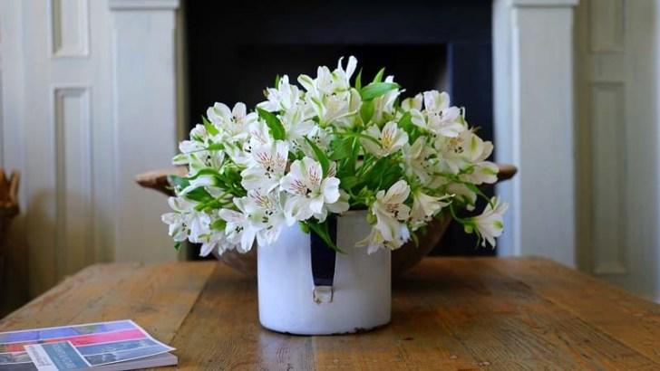 Cómo cuidar las flores en invierno