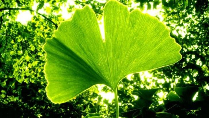 La botánica más insólita