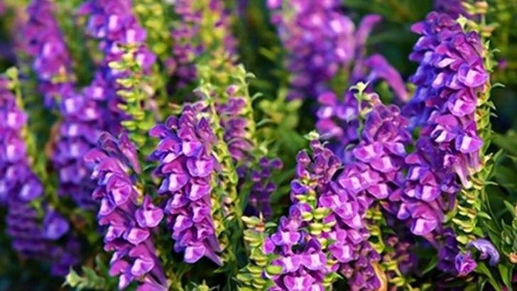 Una planta medicinal contra el cáncer