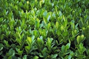 metabolitos-en-las-plantas