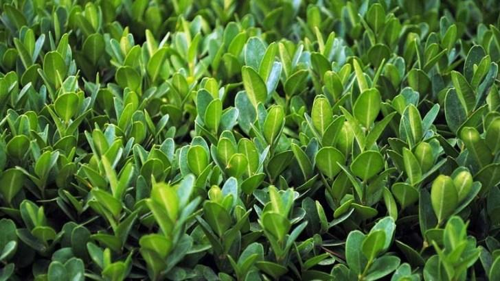 Descubierto el origen de los efectos medicinales de las plantas