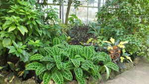 plantas-para-cosmetica
