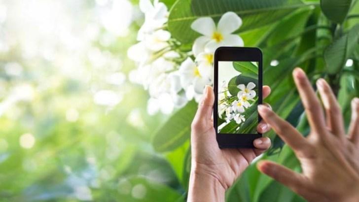 PlantSnap, conoce todas las especies vegetales