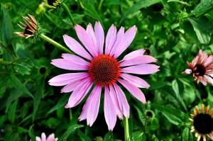 flor-en-el-jardin