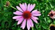 Los mejores fertilizantes para el jardín