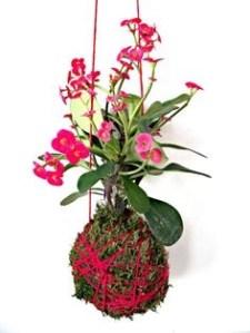 Kokemama flores