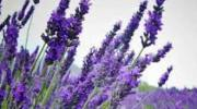 El olor de las plantas como barrera defensiva