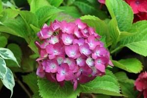 planta-con-flores