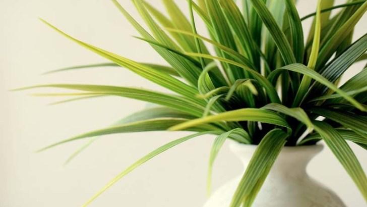 6 plantas decorativas para tu hogar