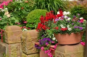 plantas-de-jardin-g934j