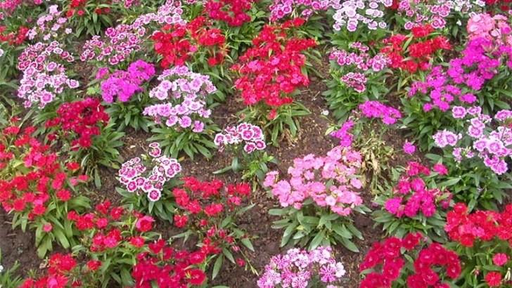 La primavera ha llegado antes a las plantas
