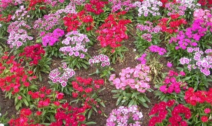 flores-en-primavera