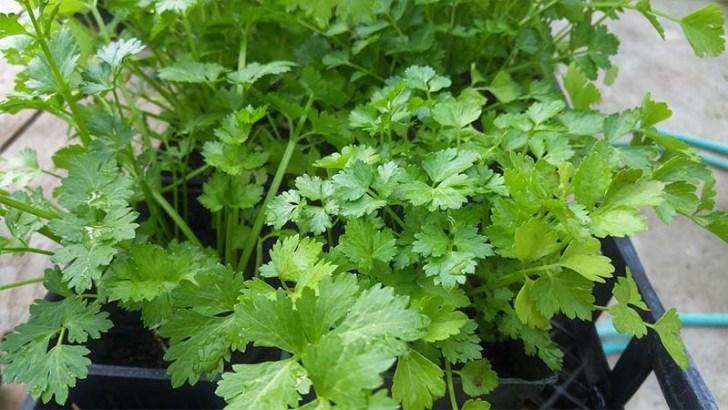 Consejos para el cultivo de hierbas y plantas aromáticas