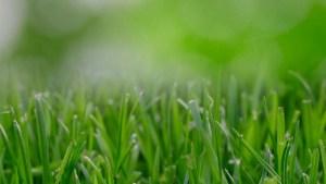 fertilizante-para-el-jardin
