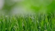 Elegir fertilizante para el jardín