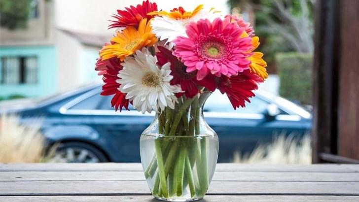 Consigue un mejor aspecto para tus flores