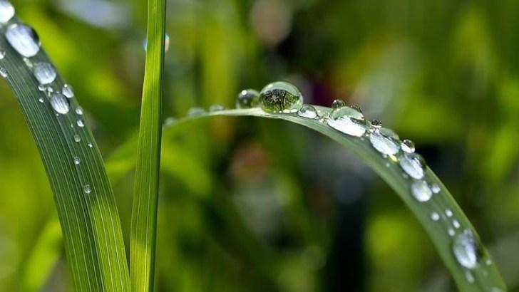 Aumento de la fotosíntesis por la actividad humana