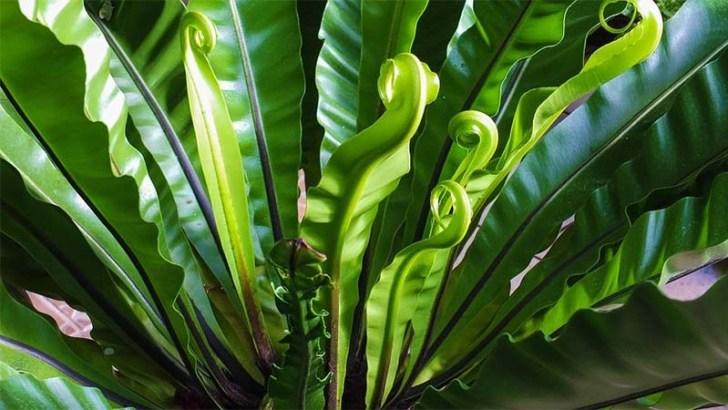 Plantas preservadas, lo último en decoración