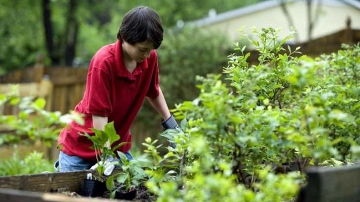Malas hierbas, el enemigo de nuestro jardín