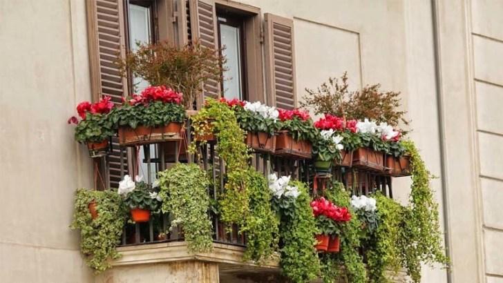 ventana-con-plantas