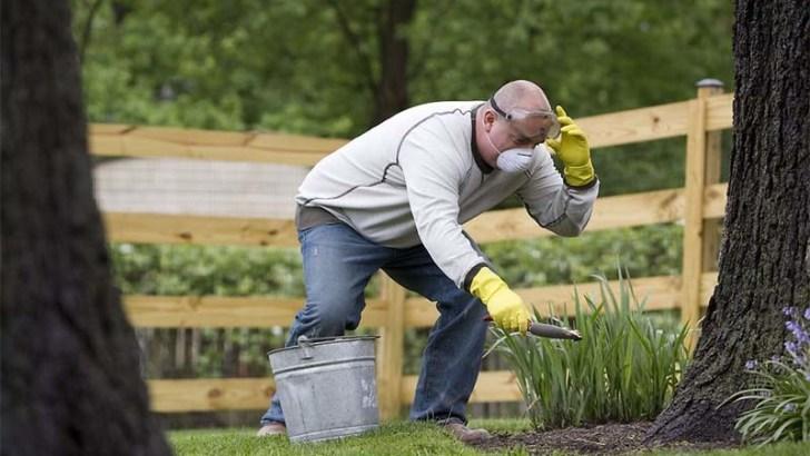 3 consejos para el cuidado de las plantas