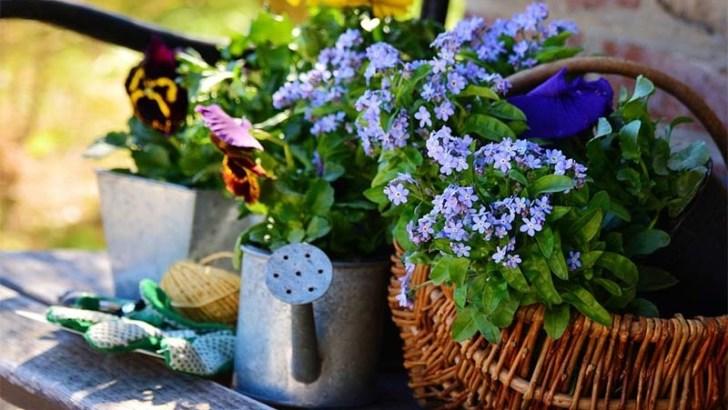 Consejos indispensables para tus plantas de jardín