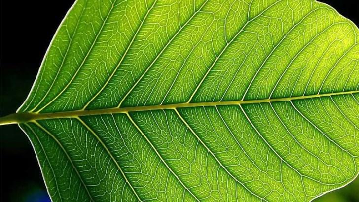Fórmulas mátemáticas aplicadas a las plantas
