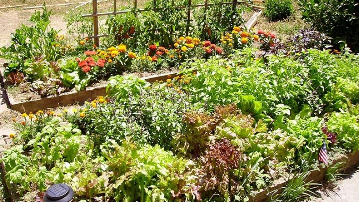 Cuida tu jardín con estos trucos