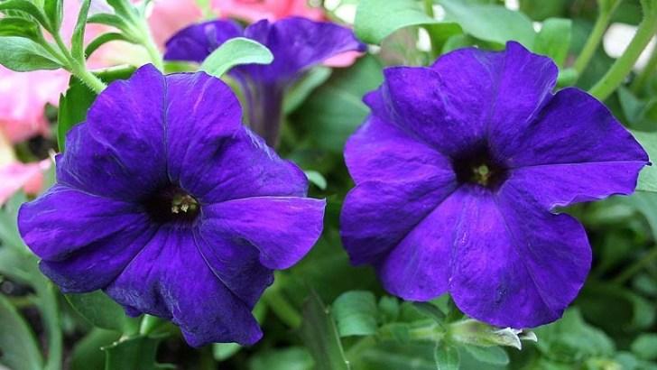 Consejos para el cuidado de flores