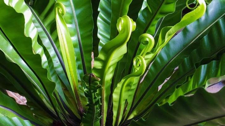 Plantas más resistentes al cambio climático