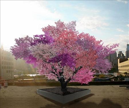 Árboles multifrutas: el Árbol de las 40 frutas