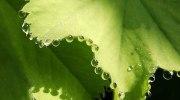 El proceso por el que las plantas sudan