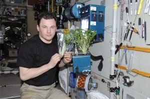 plantas-en-el-espacio