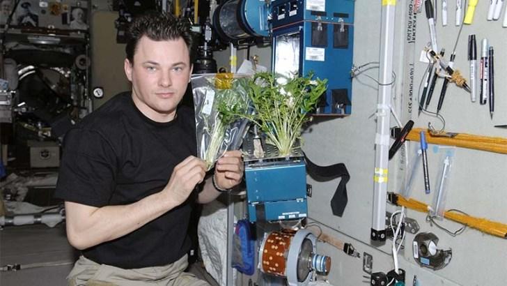 Engañar a las plantas para que crezcan sin gravedad