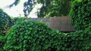 plantas-trepadoras