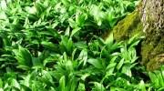 Descubren tres nuevas especies de plantas